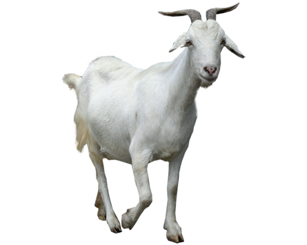 Goat-PNG-Clipart